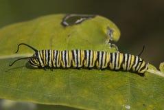 Trattore a cingoli del monarca fotografia stock