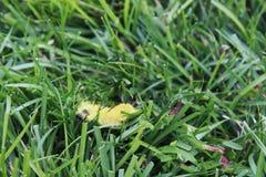 Trattore a cingoli giallo di Dagger Moth dell'americano fotografie stock