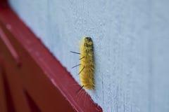 Trattore a cingoli giallo di Dagger Moth dell'americano fotografia stock