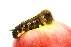 Trattore a cingoli sulla mela rossa Immagine Stock