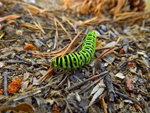 Trattore a cingoli verde di swallowtail fotografia stock