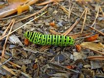 Trattore a cingoli verde di swallowtail Fotografia Stock Libera da Diritti