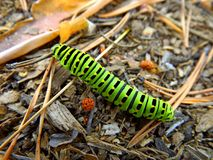 Trattore a cingoli verde di swallowtail fotografie stock libere da diritti