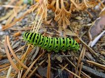 Trattore a cingoli verde di swallowtail immagine stock libera da diritti