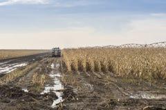 Trattore con i rimorchi nel fango sul campo raccolto Fotografia Stock