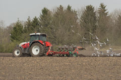 Trattore d'aratura di agricoltura con i gabbiani Immagine Stock Libera da Diritti
