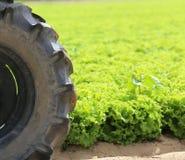 trattore della grande ruota nel campo di lattuga Fotografia Stock
