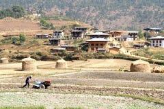Trattore della macchina di agricoltura di uso dell'agricoltore mini che prepara terra per la p fotografie stock