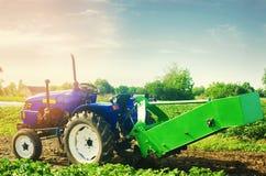 Trattore nel campo con un aratro per le patate di scavatura che raccolgono, lavoro stagionale, ortaggi freschi, agro-cultura, col Immagini Stock