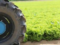 trattore nel campo di lattuga sviluppato di estate Immagini Stock