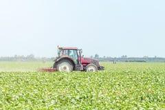 Trattore nel campo verde Macchina di agricoltura Fotografia Stock