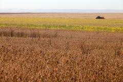 Trattore nella piantatura della soia Immagine Stock Libera da Diritti