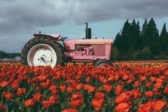 Trattore rosa in un campo in pieno di bei tulipani variopinti fotografia stock libera da diritti