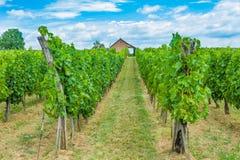 Traube Felder und wineyard Lizenzfreie Stockfotos