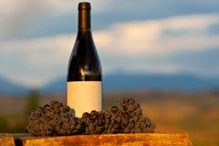 Traube und Wein am Weinberg Lizenzfreie Stockbilder