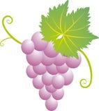 Traube-Wein Stockfoto