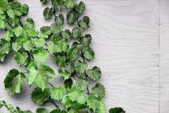 Trauben-Blätter auf hölzernem Hintergrund lizenzfreie stockfotografie