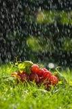 Trauben im Regen Stockbilder