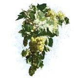 Trauben mit Blättern Stockbilder