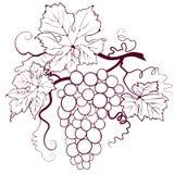 Trauben mit Blättern lizenzfreie abbildung