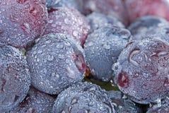 Trauben mit Tropfen, frische Frucht. Stockfotos