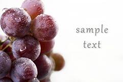 Trauben mit Wassertropfen, mit der Fähigkeit, Text einzutragen Lizenzfreies Stockbild