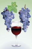 Trauben und Wein Stockbild