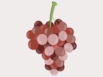 Trauben Weintrauben Auch im corel abgehobenen Betrag Vektor Abbildung