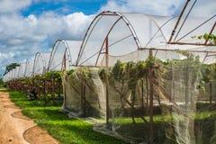 Traubenbauernhof in der Landschaft stockbilder