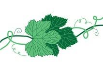 Traubenblätter lizenzfreie abbildung