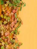 Traubenblätter auf Hausmauer Stockbilder