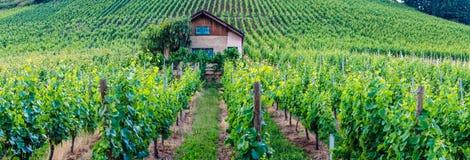 Traubenfelder in Deutschland Stockfotos