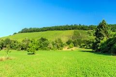 Traubenfelder in Deutschland Stockbild