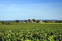 Traubenfelder im Loire Valley stockbilder