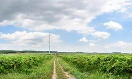 Traubengarten und -himmel Stockfotos