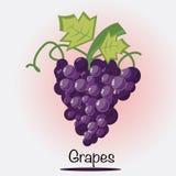 Traubenvektor Obst und Gemüse Stockfotos
