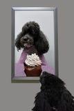 Traum des Hundes Stockfoto
