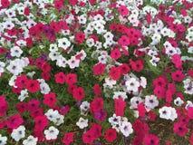 Traum von Blumen Lizenzfreie Stockbilder