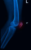 Trauma knee joint x-rays image Stock Images