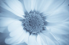 Traumhafte Blume Stockbild