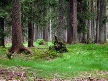 TraumSumava Wald Lizenzfreies Stockbild