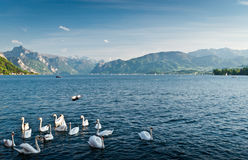 Traunsee Stock Photography