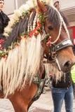 Traunstein, Deutschland, Bavaria/- 06th Kwiecień: dekorujący koń Georgi przejażdżką w Traunstein Zdjęcia Stock