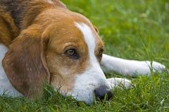 Traurig Hund Stockbild