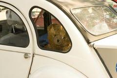 Traurig Teddybär-tragen Sie Lizenzfreies Stockbild