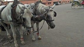 Traurig vom Tier in jamma lfna Marrakesch Stockfoto