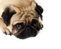 Traurige Augen Lizenzfreies Stockfoto