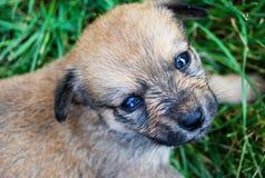 Traurige Augen des Hundewelpen, die nach Liebe suchen Lizenzfreie Stockfotografie