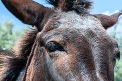 Traurige Augen des Viehs, Tierschutzkonzept, Lizenzfreie Stockbilder