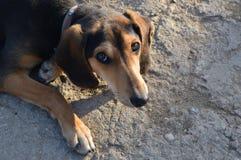 Traurige Augen eines erschrockenen Hundes Stockfotos